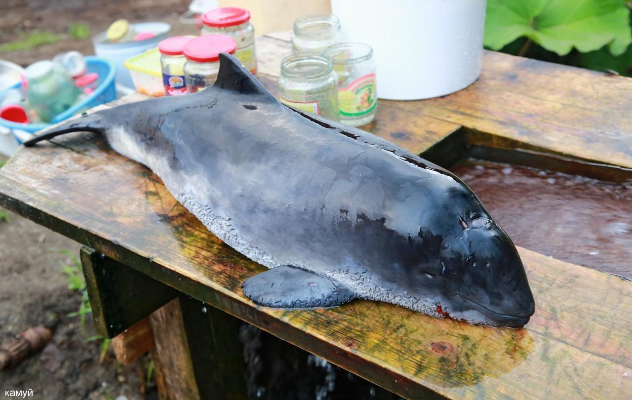 камуй: Дельфинёнок