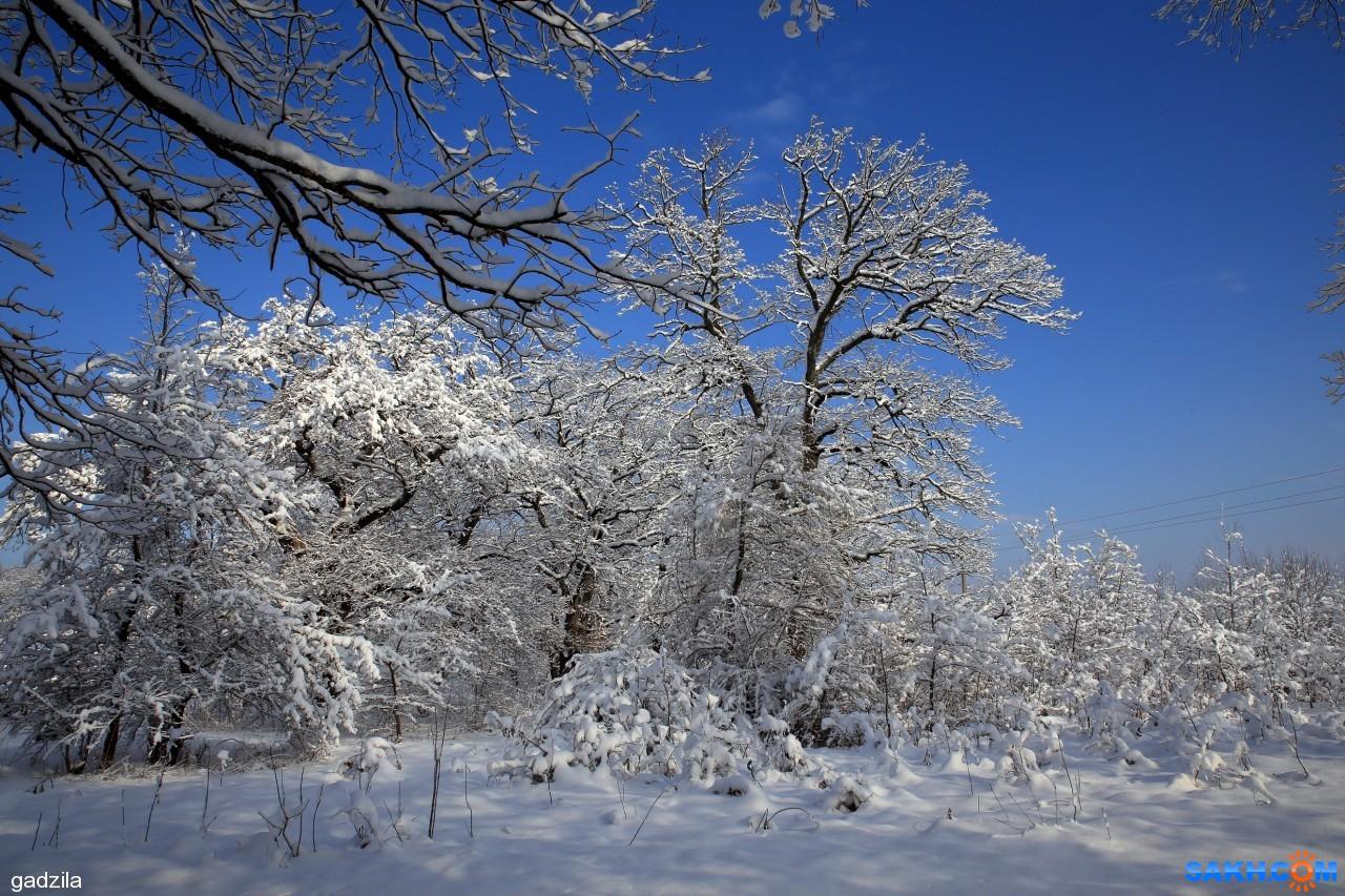 gadzila: Зима Кубани