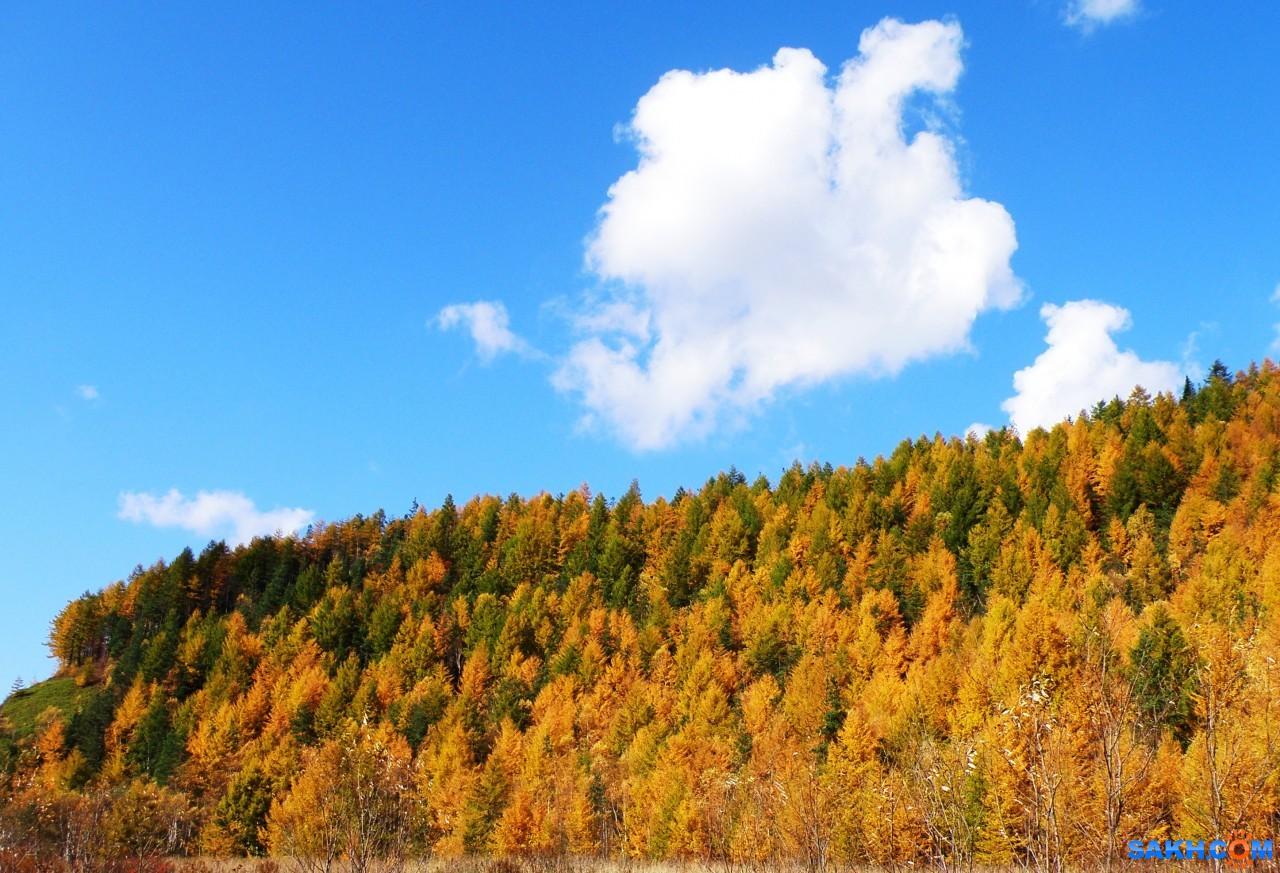 tasya: Краски осени