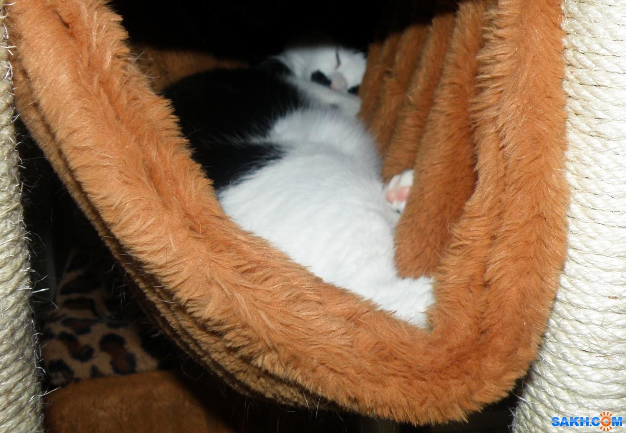tasya: Мася спит в гамаке