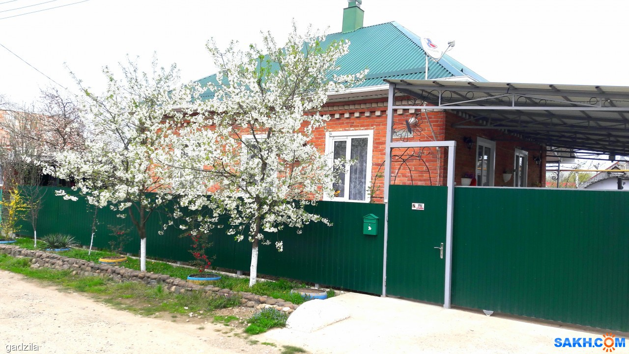 gadzila: Цветет вишня