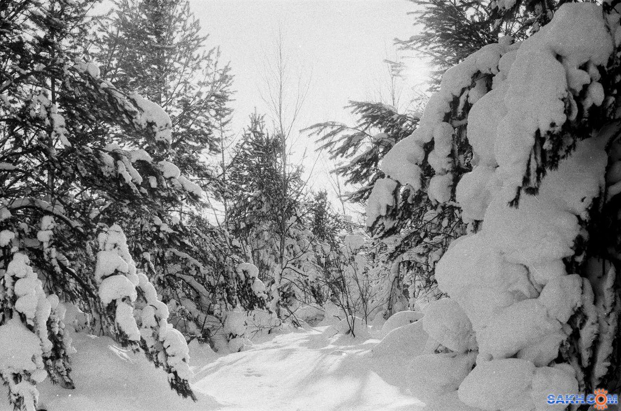 Fokir: Зимняя сказка