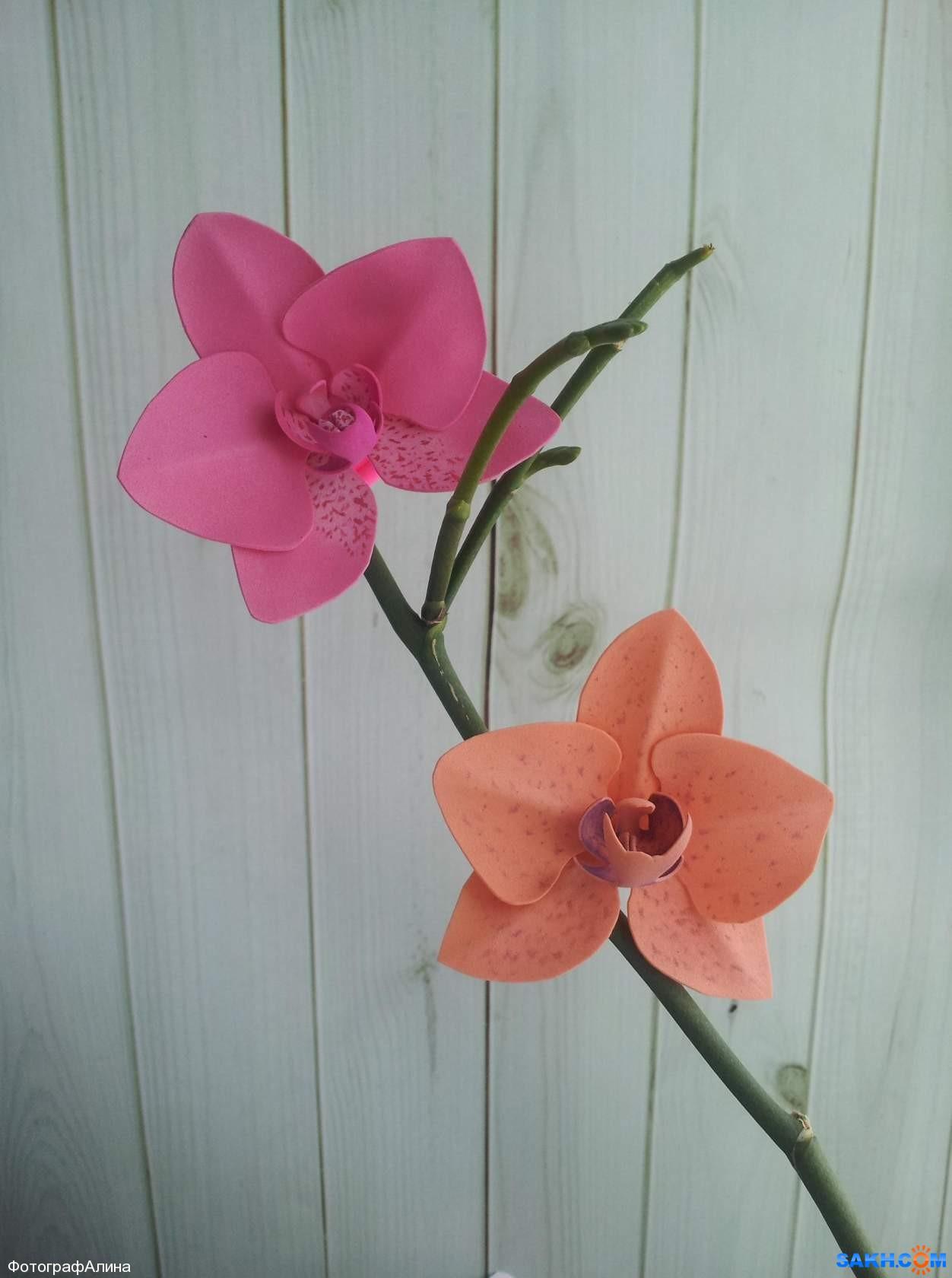 ФотографАлина: резинки орхидея