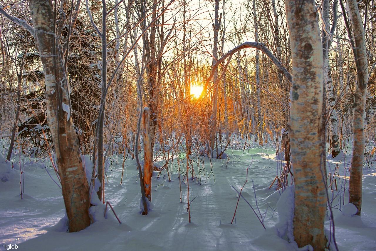 1glob: вечер в лесу