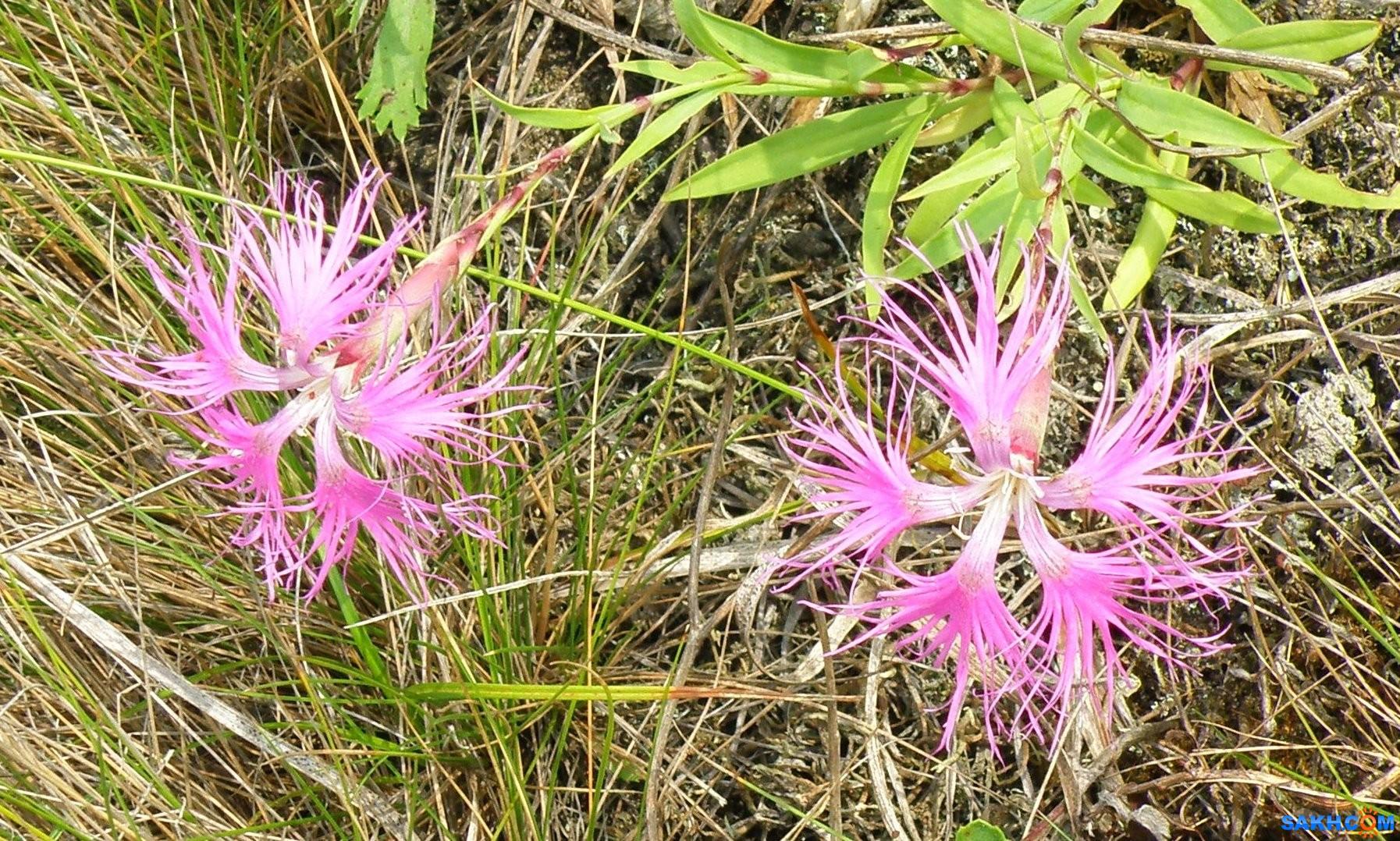 tasya: Цветочки