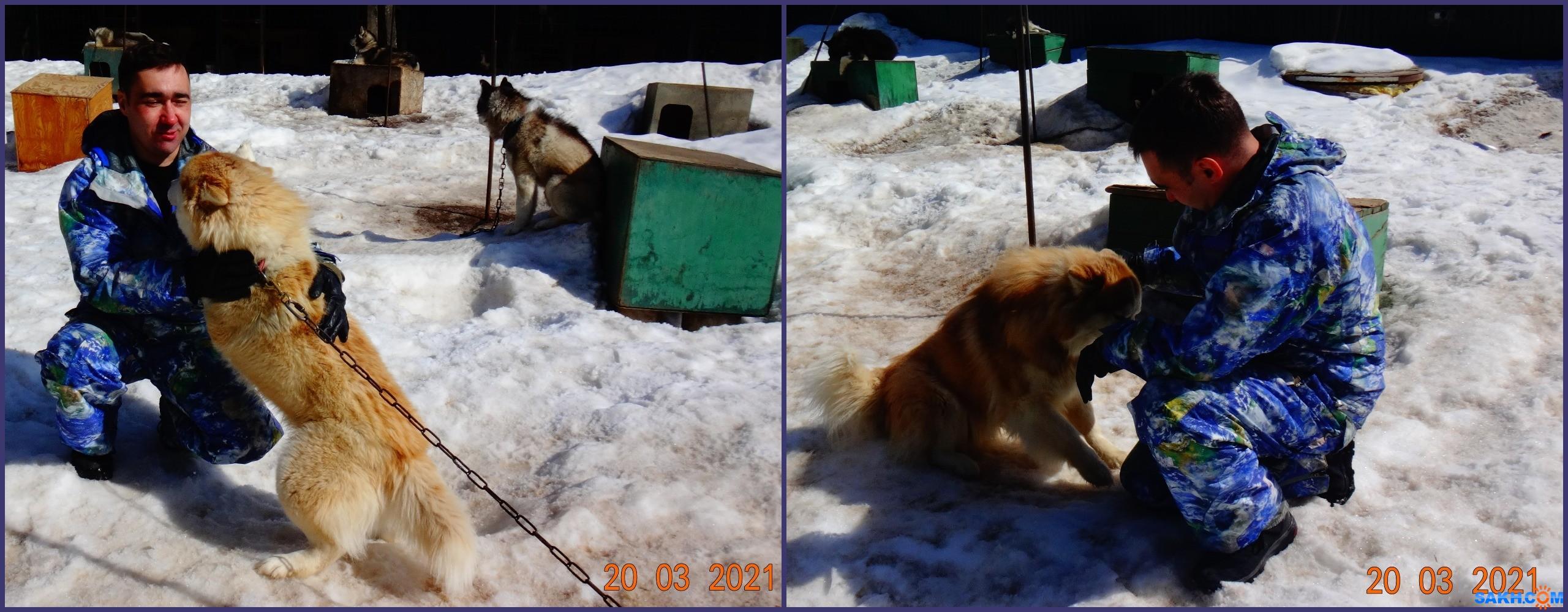 vera.modzhtnok.49: Знакомство с собаками.
