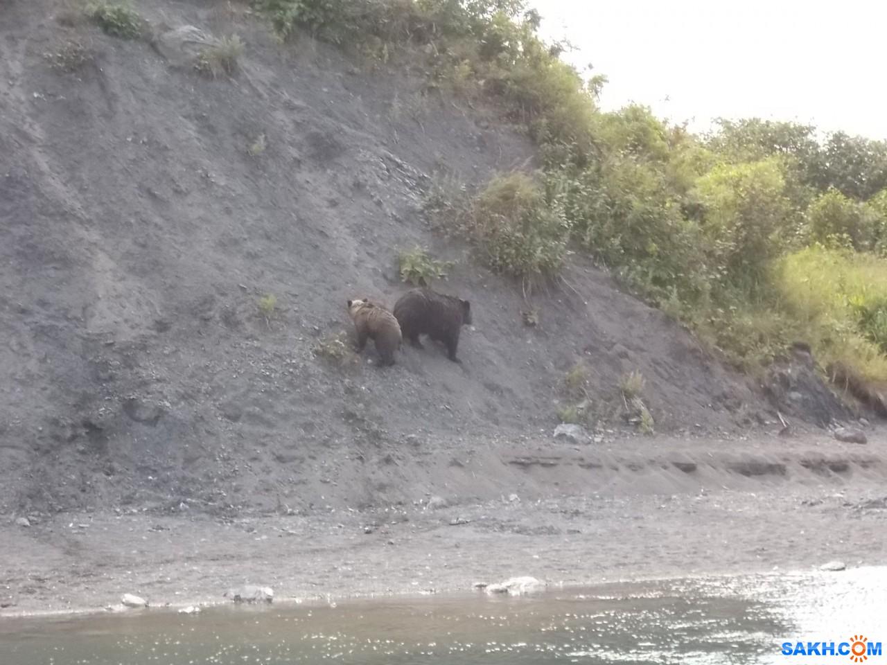 Valery: Медведи