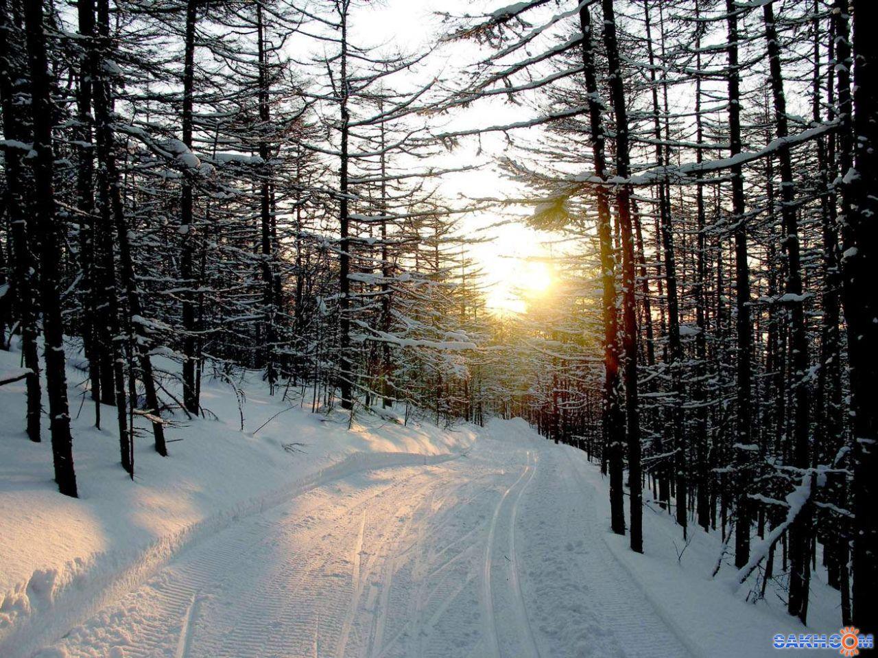 А-ГЕНА-: Вечер в лесу