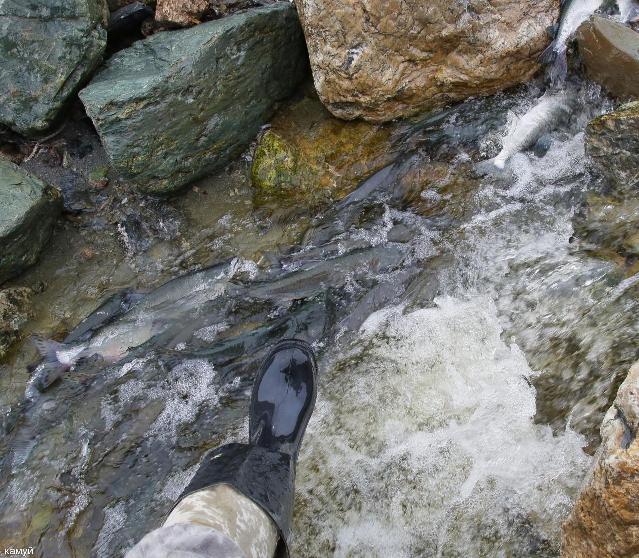 камуй: Через ручей...