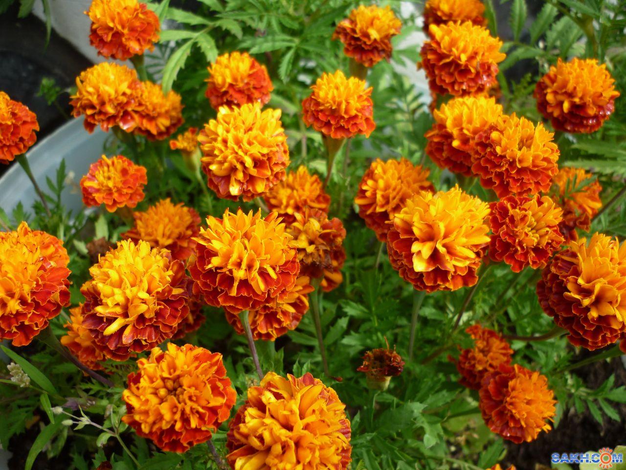 Анна.Б: цветы