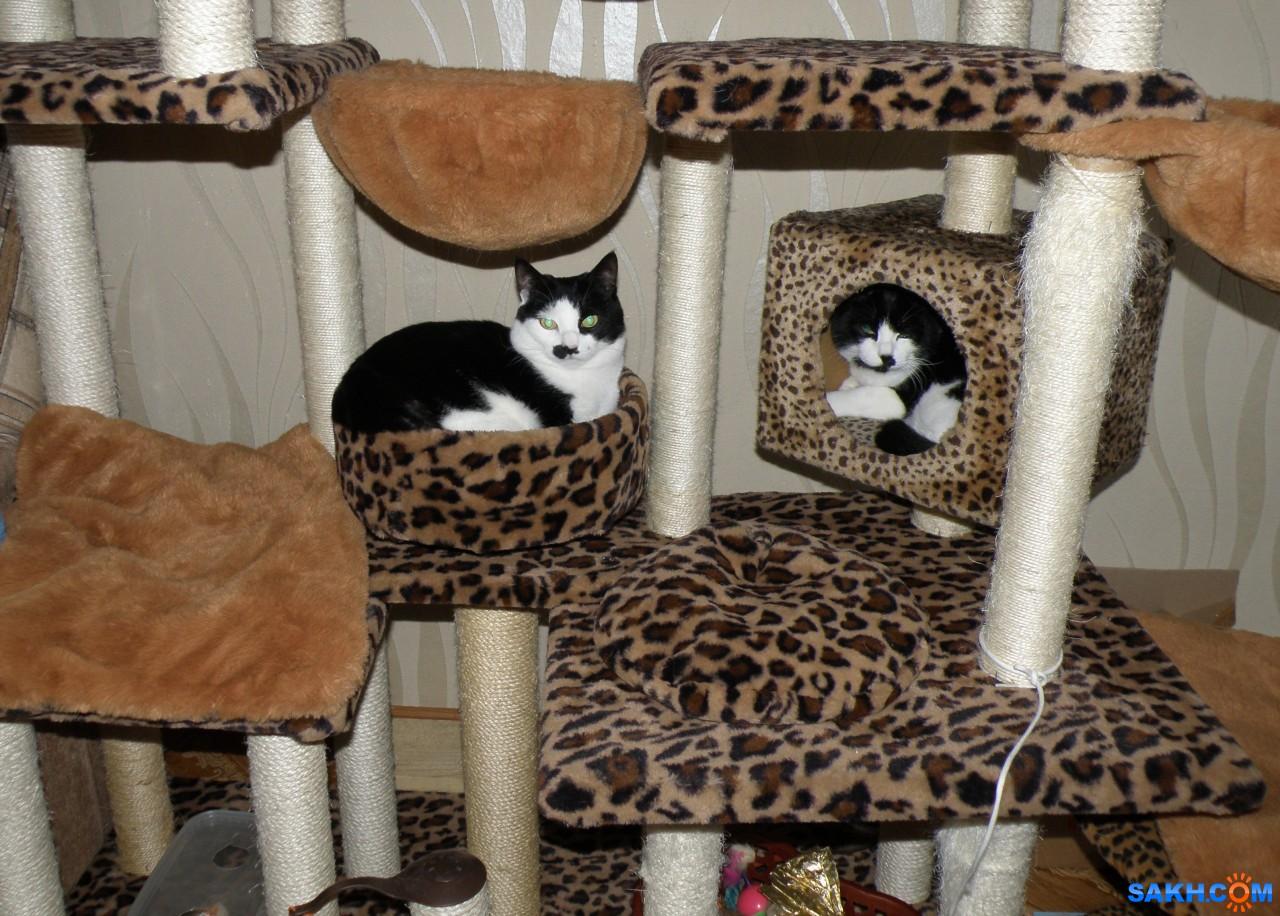tasya: Сестренки. Бася в домике, Мася в лежанке.
