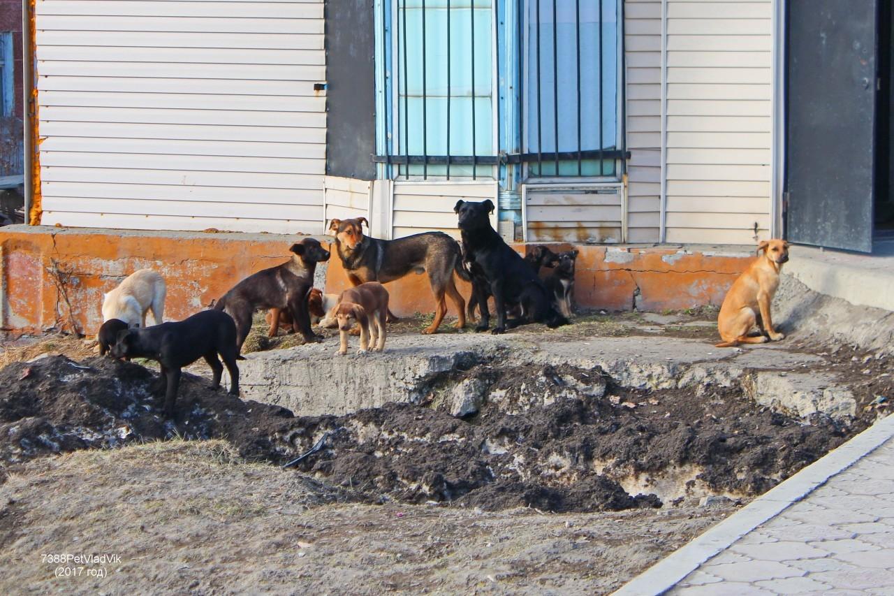 7388PetVladVik: Бездомные собачки ...