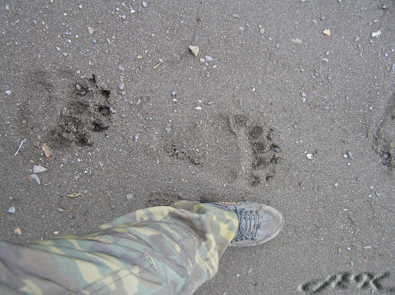 sakh-wolf: Один размерчик!