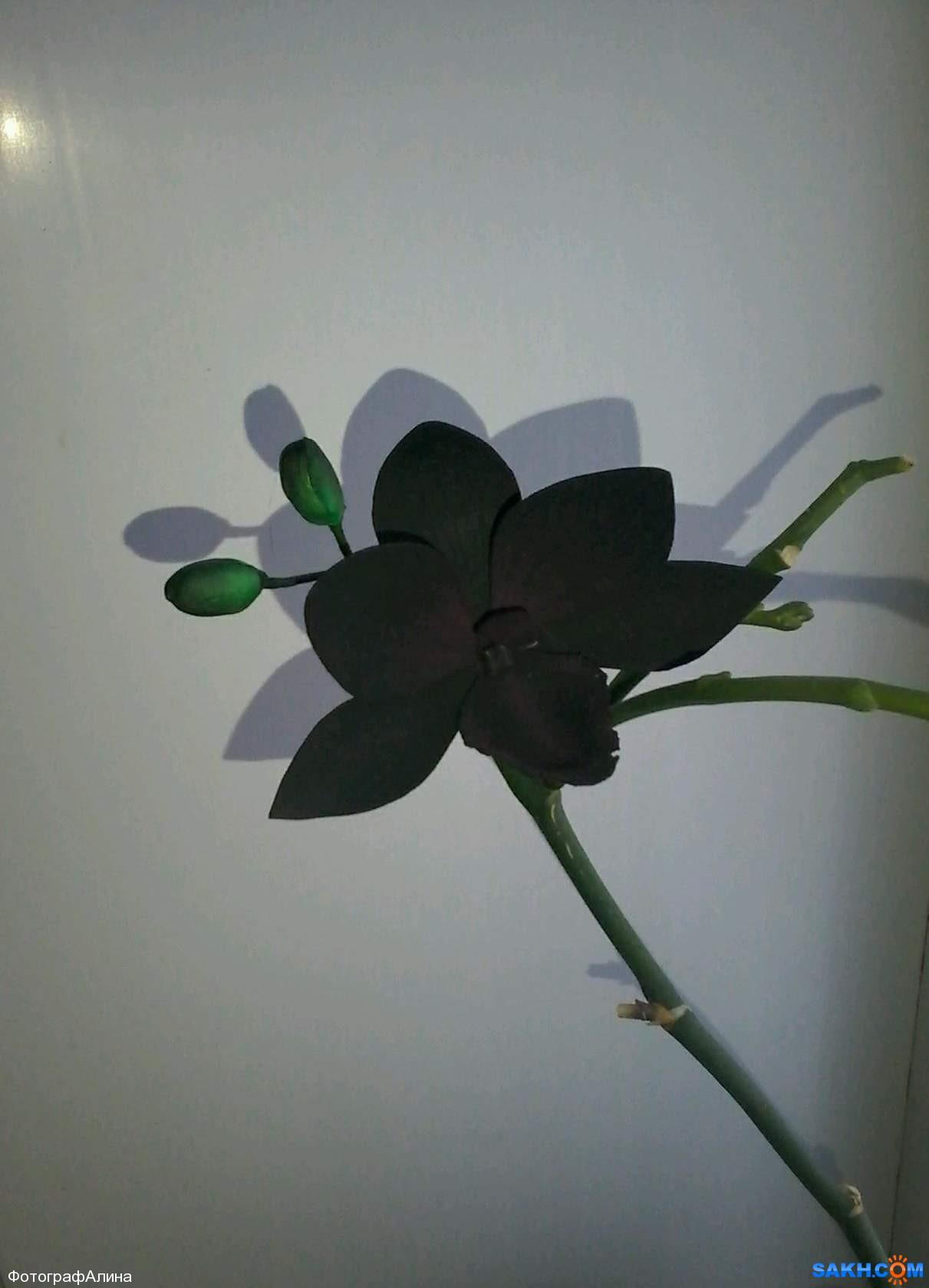 ФотографАлина: заколка орхидея
