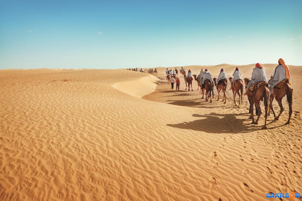 мяша: Desert_Camels_488691