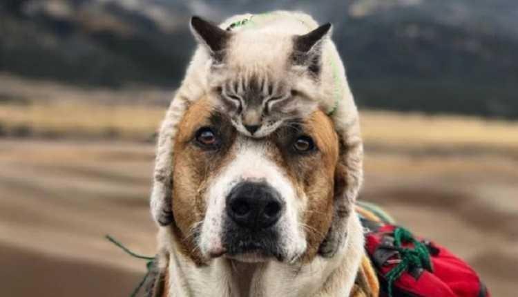 SCRAMBLER75: шапка на зиму - кошачий малахай