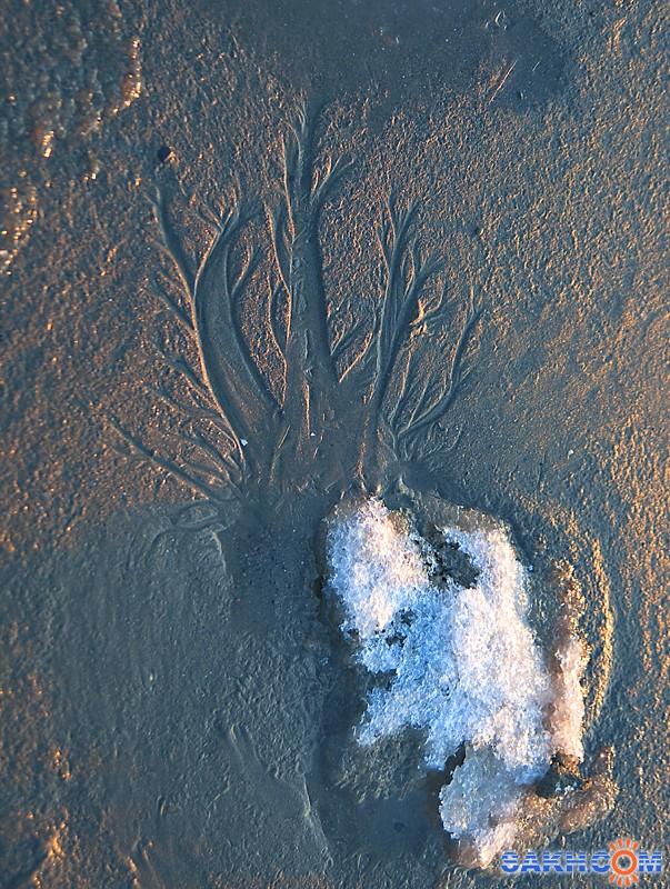 Zinaida: Песчаное дерево