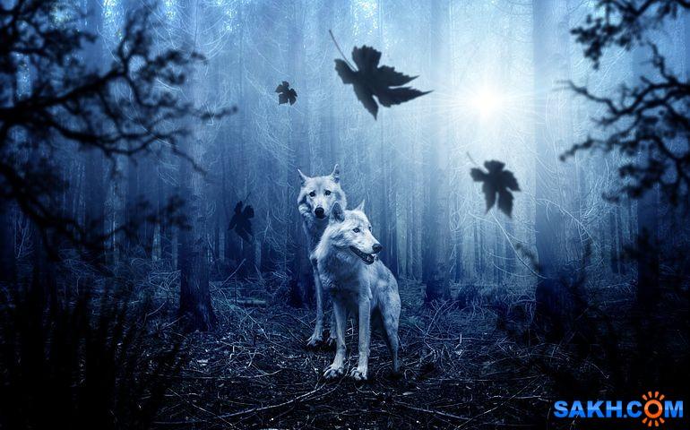 Shastlivaya: wolf-2864647__480