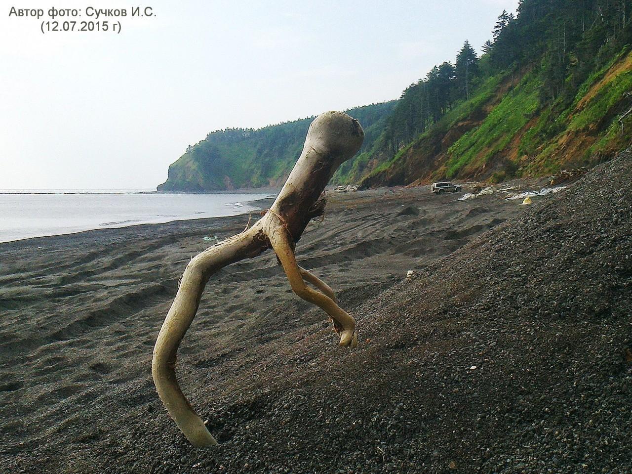 7388PetVladVik: Прогулки по берегу моря.