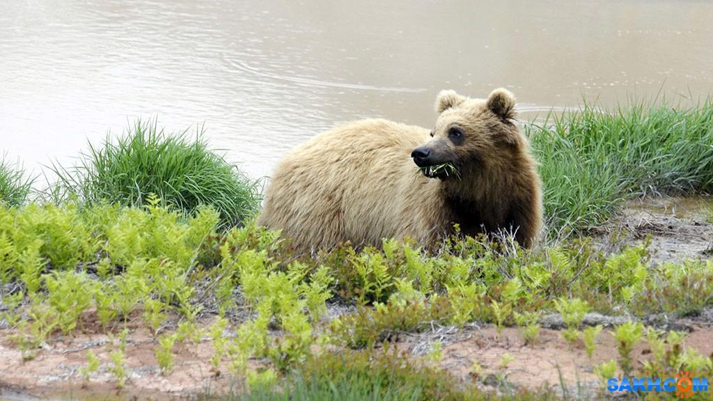 JolyGolf: Медведь