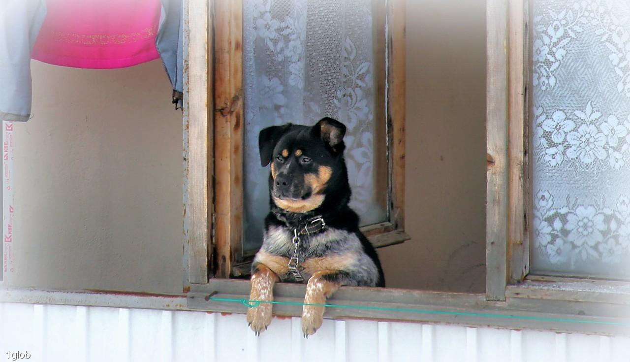 1glob: жизнь собачья