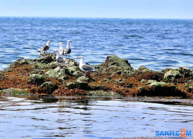 gadzila: На отливе в мае