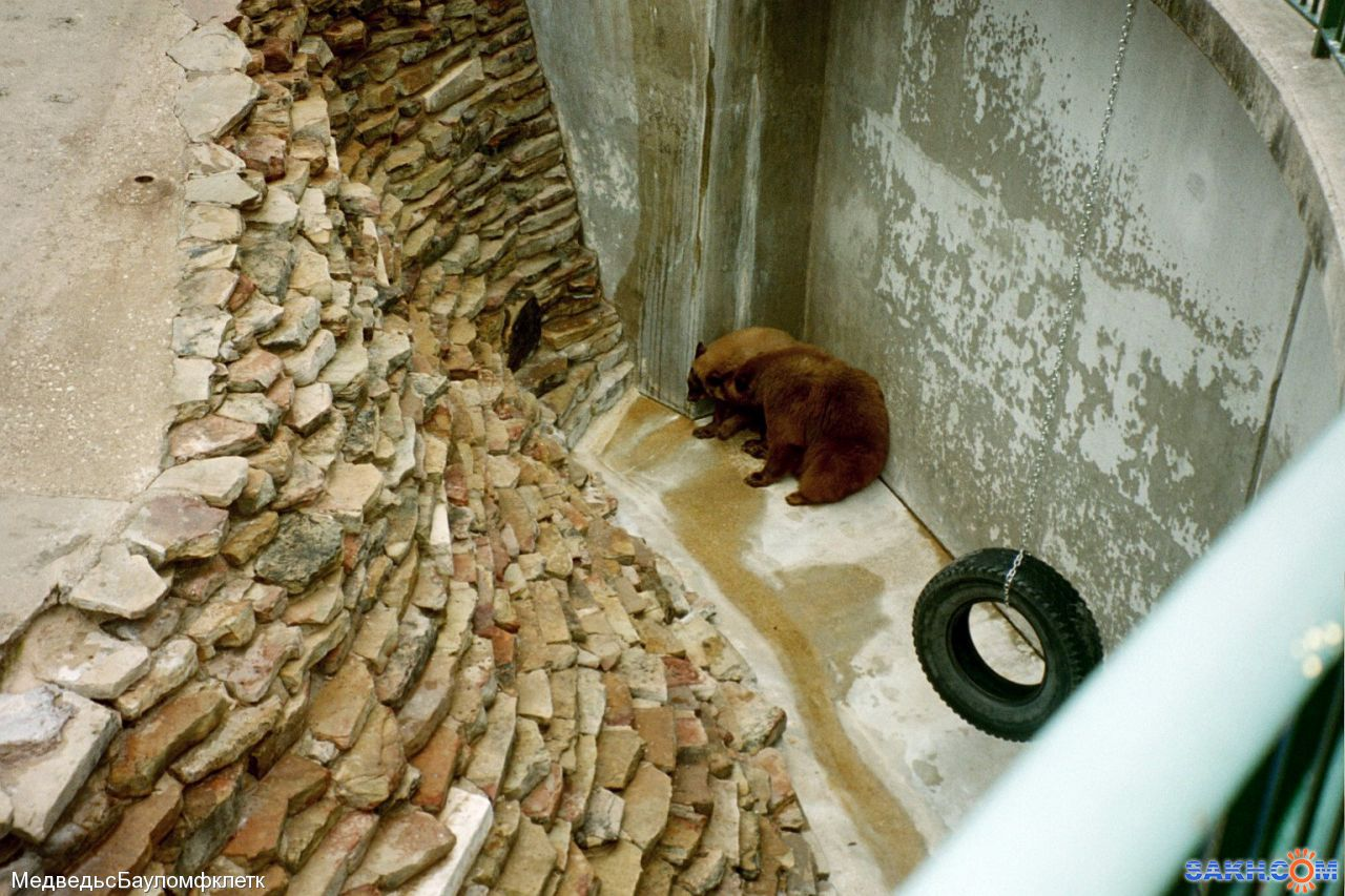 МедведьсБауломфклетк: мишки
