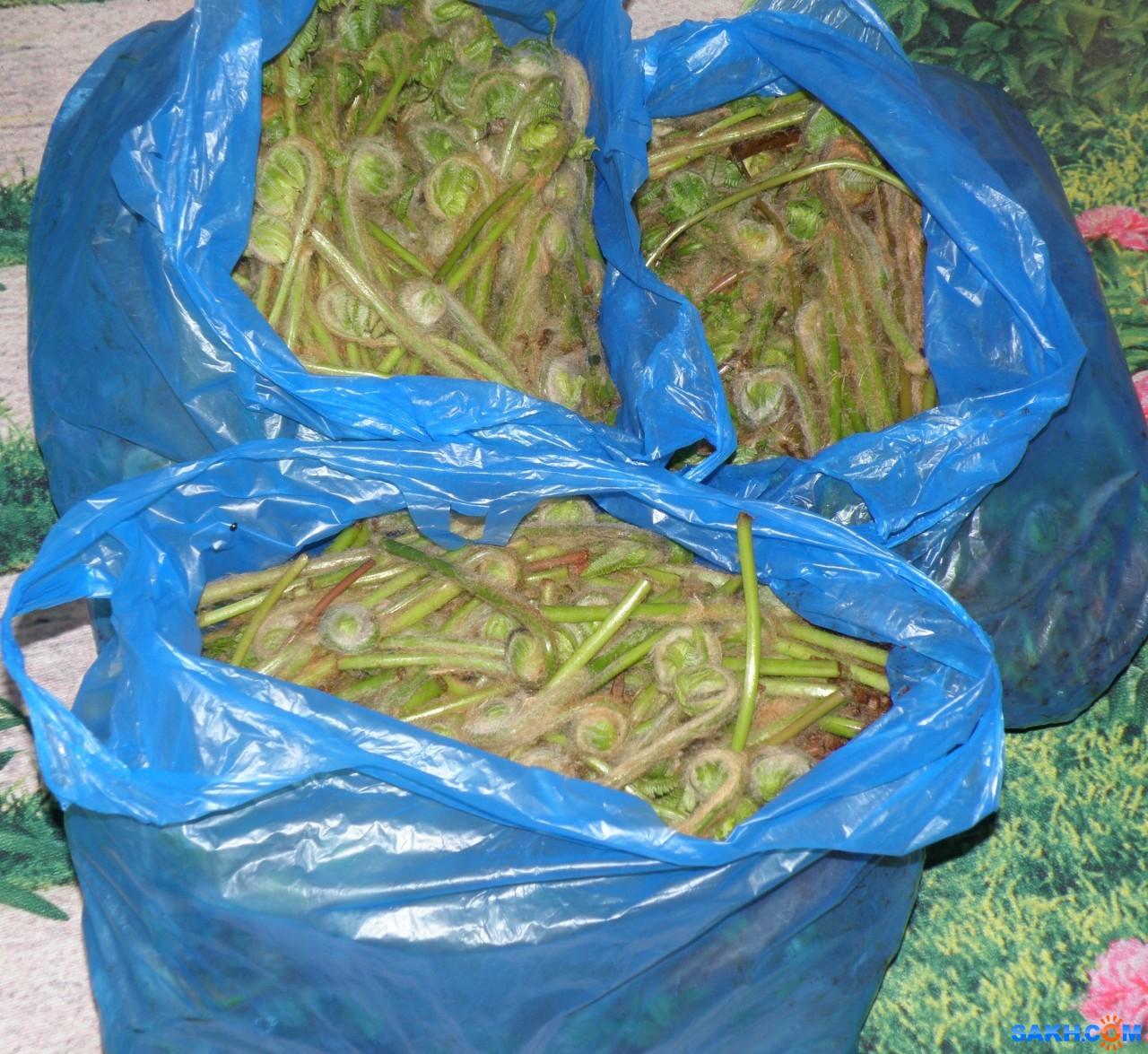 tasya: Собрано 25кг папоротника осмунда