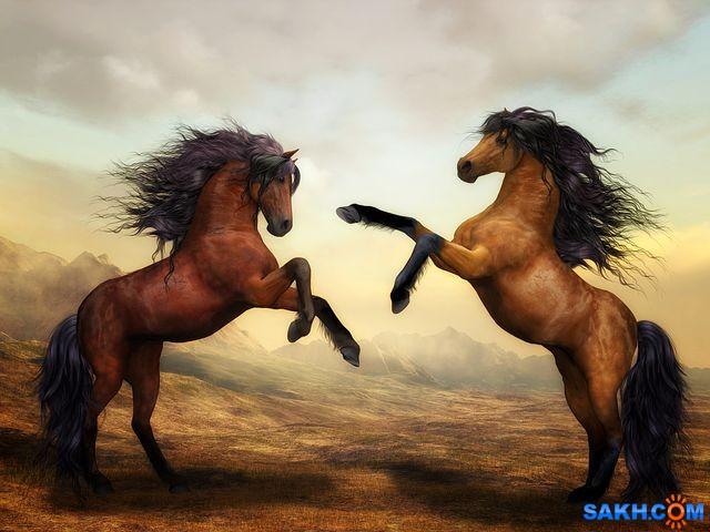 Shastlivaya: horses-2904536__480