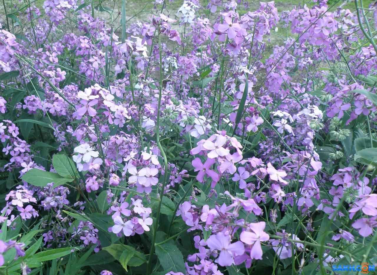tasya: Полевые цветы
