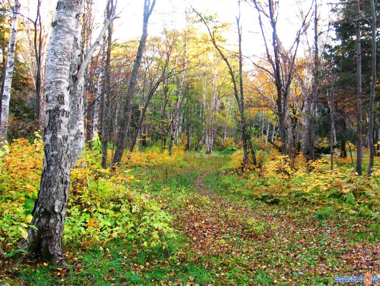 MRAK: осень в парке