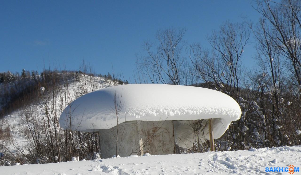 tasya: Снегом завалило