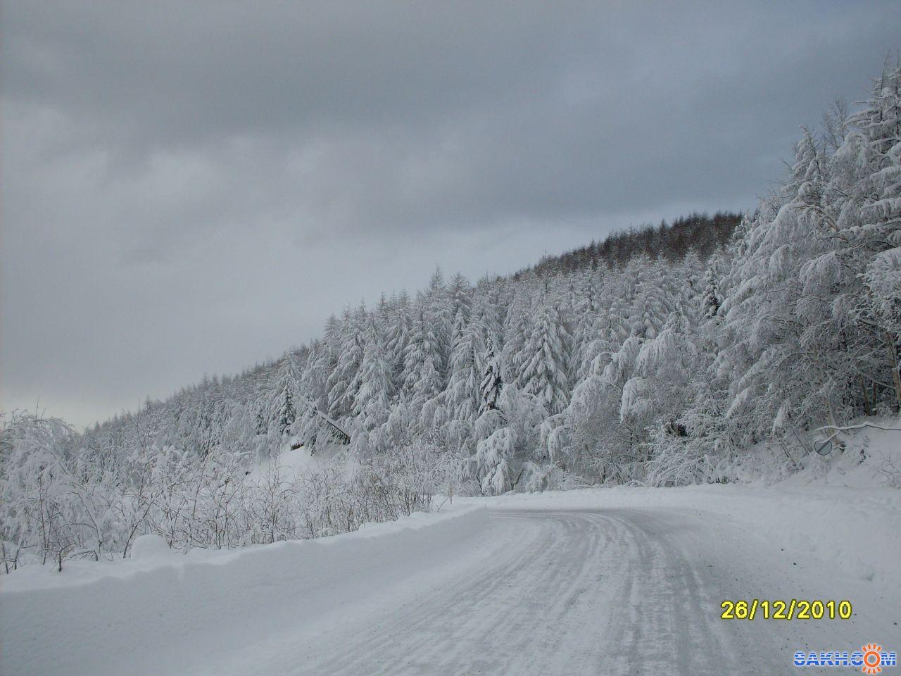 mrnsin: А лес стоит загадочный...