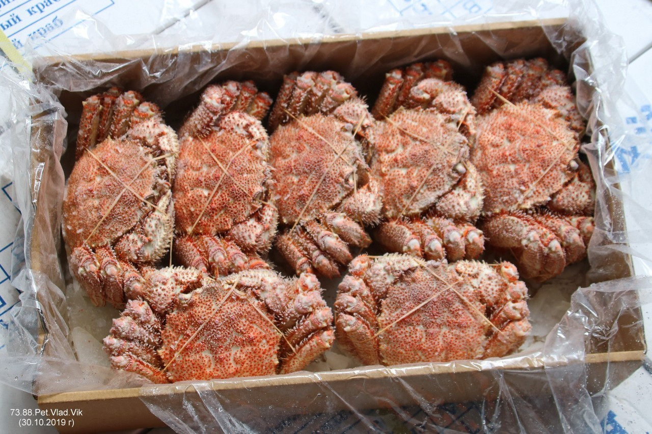 7388PetVladVik: Краб волосатый четырёхугольный варено-мороженый.   (Общий вес нетто 5 кг.)