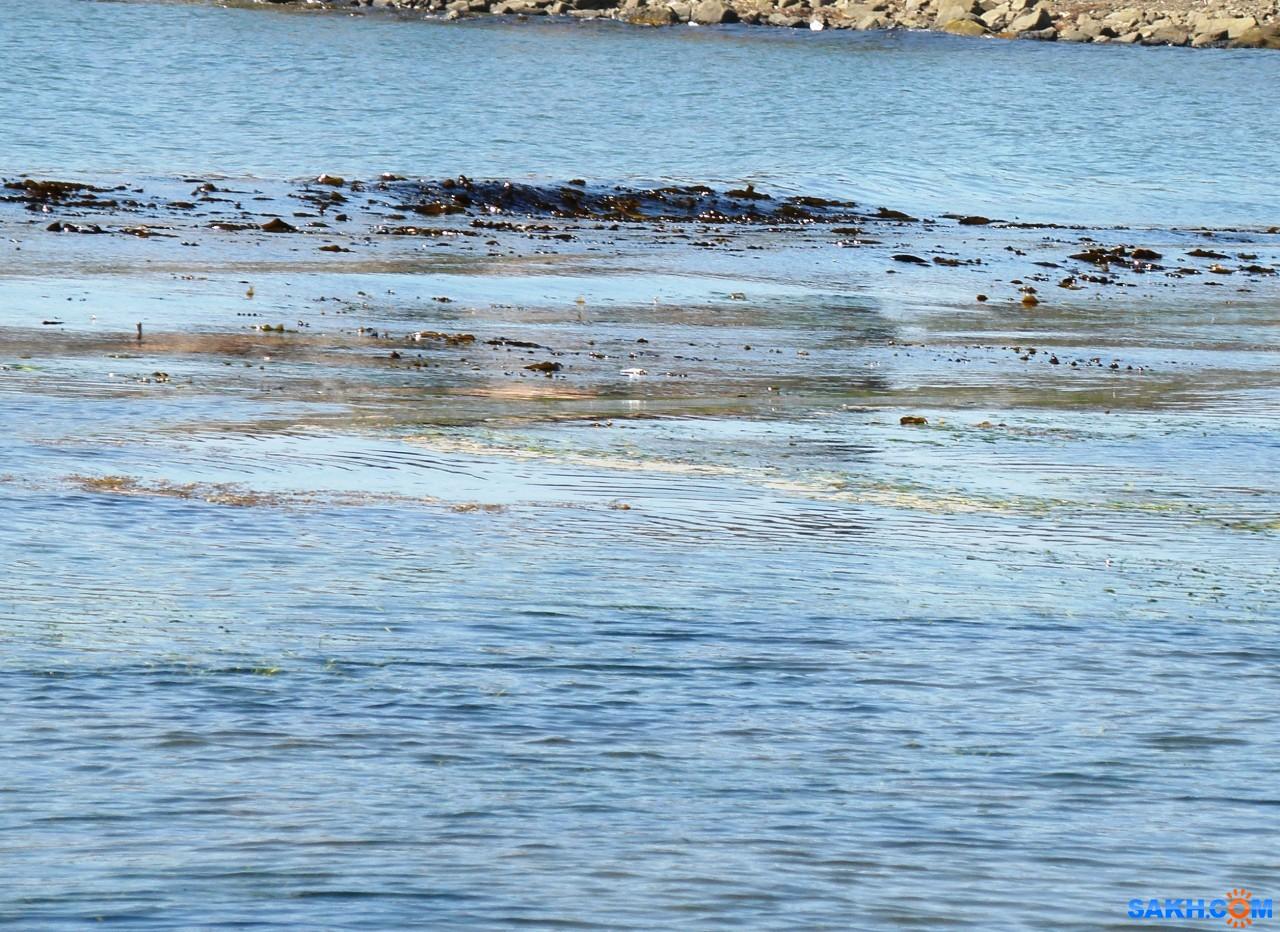 tasya: Морская капуста в море