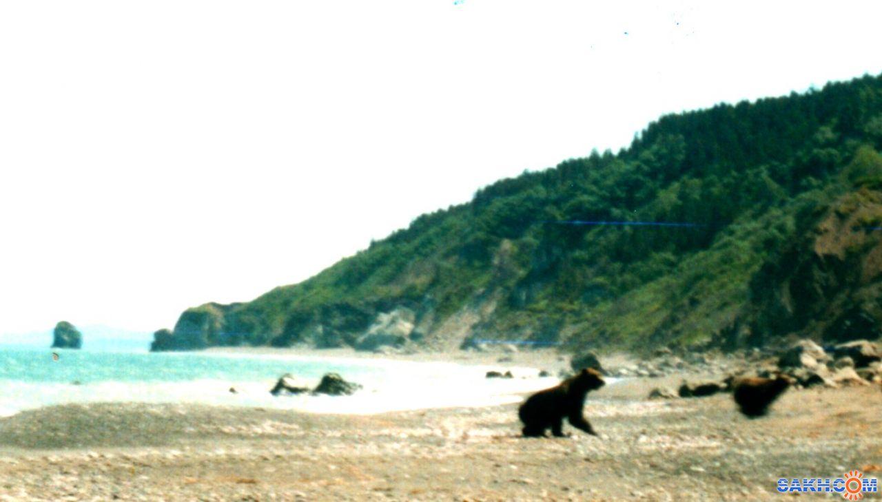 Valery: Убегающие медведи