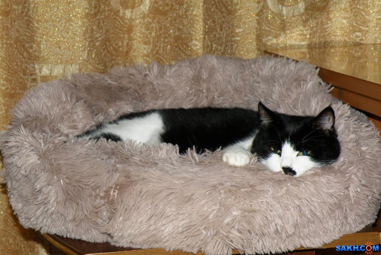 tasya: Бася в новой лежанке