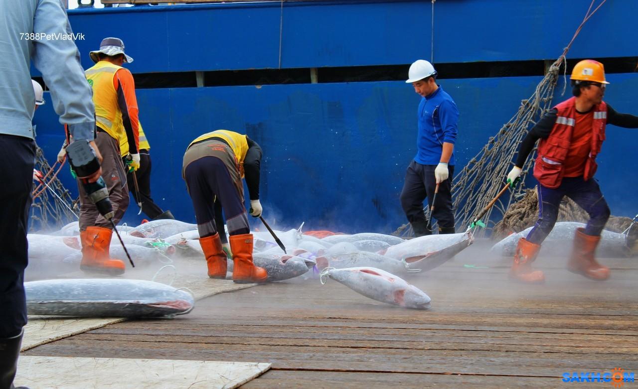 7388PetVladVik: Выгрузка тунца в Пусане.
