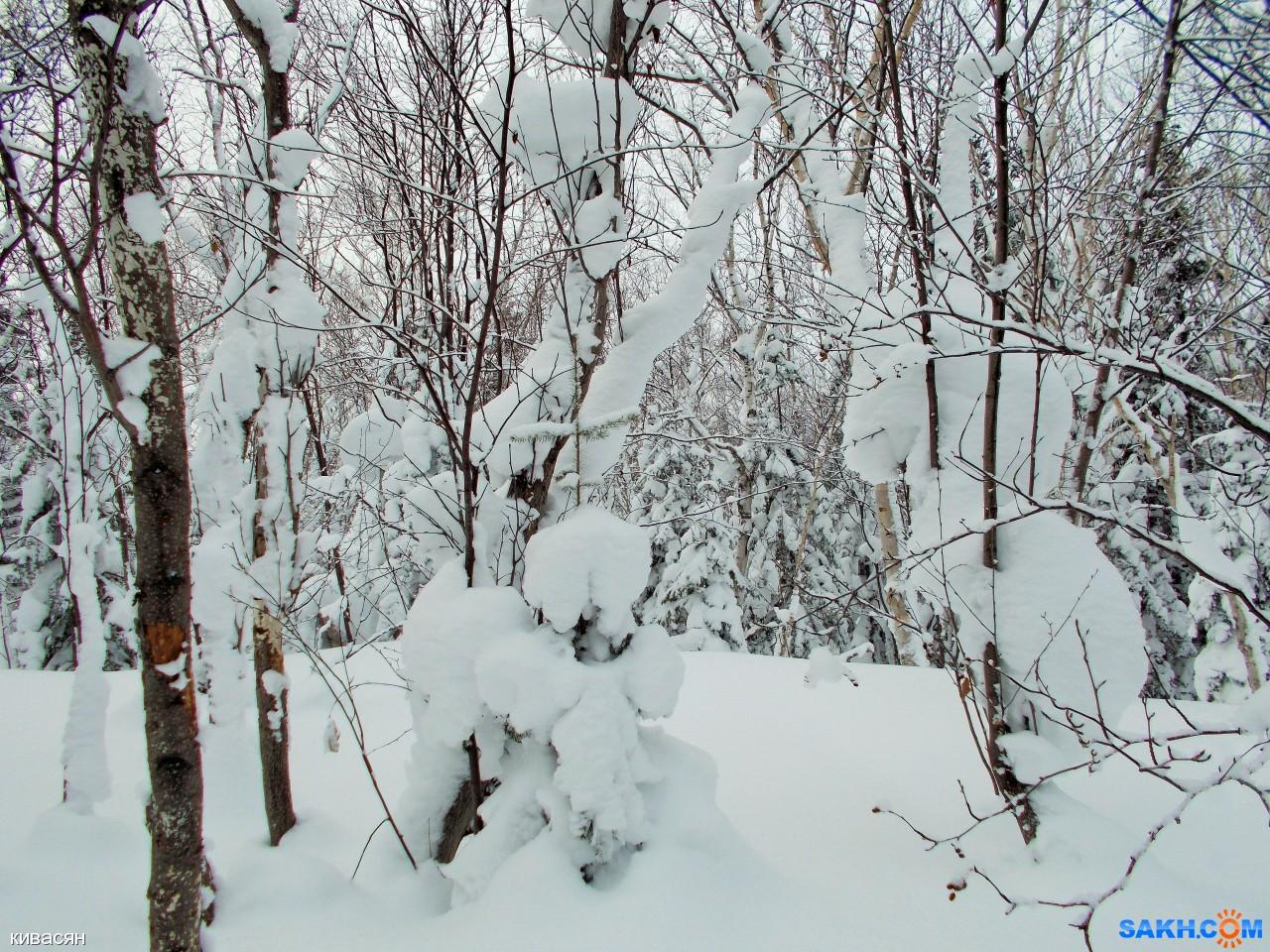 кивасян: DSCN0036