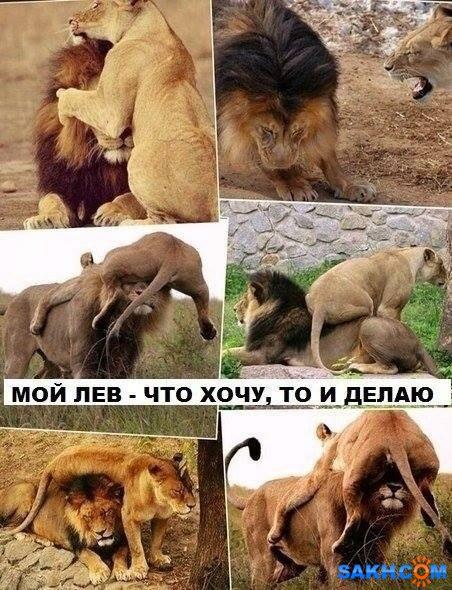 Fionka: image