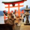 Гранд-тур на сакуру. Март-апрель 2020