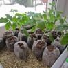 Поступление биогумуса и почвогрунта для рассады в ассортименте