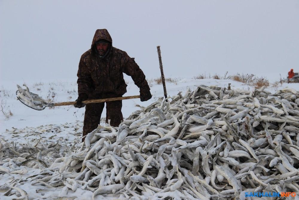 Погода южно сахалинск анива