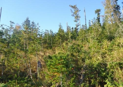 Сохранение подроста призаготовке древесины