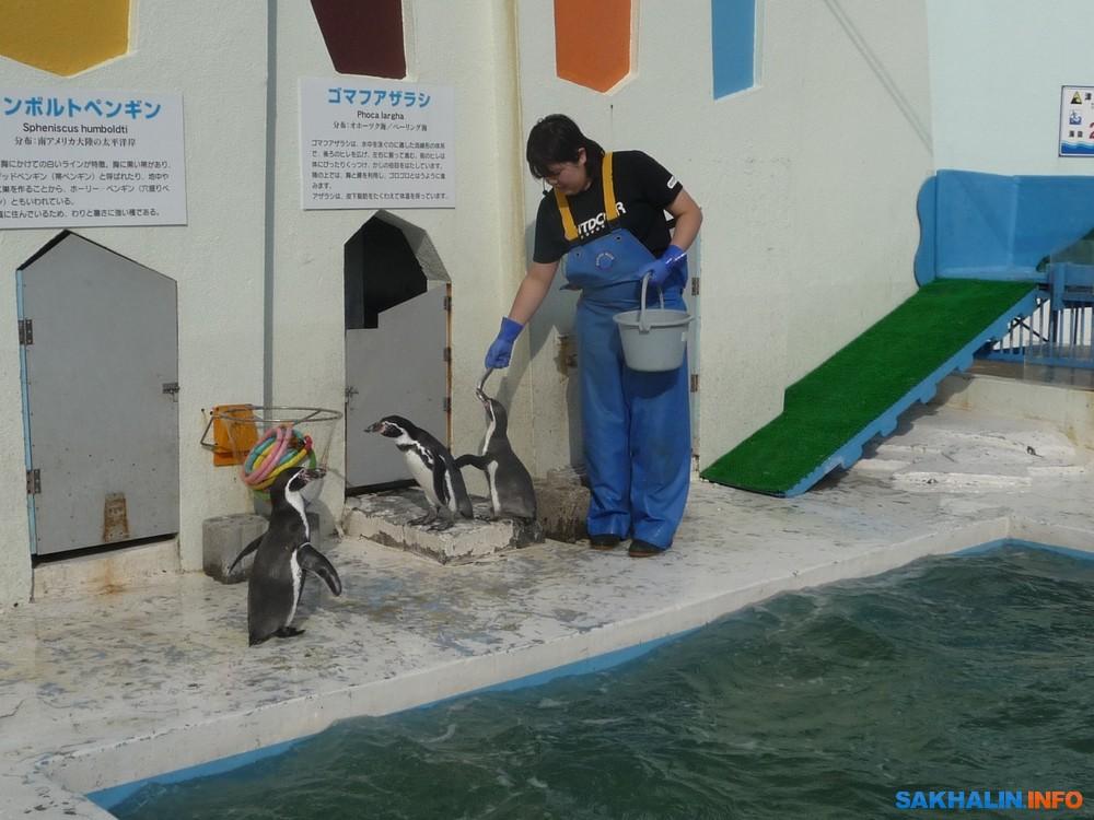 Неуклюжие пингвины