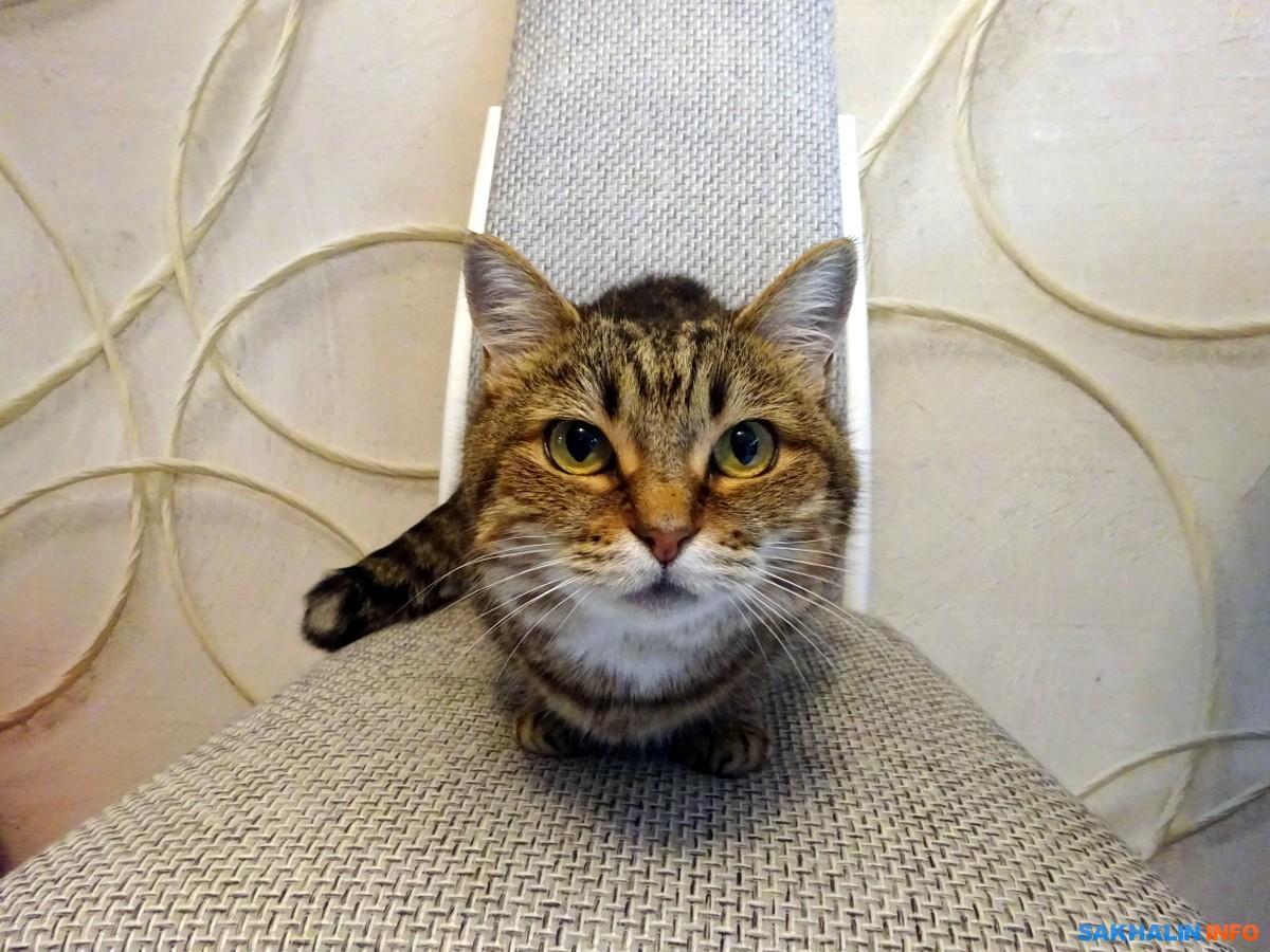 Кошка ест бетон фибробетон барнаул