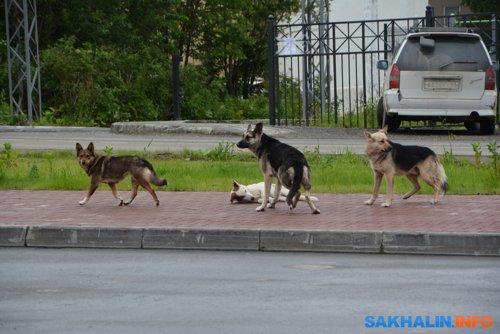 Беспризорные собаки (Южно-Сахалинск, 2018)