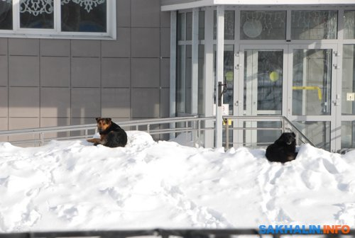Южно-Сахалинск. Сахалинский реабилитационный центр для инвалидов