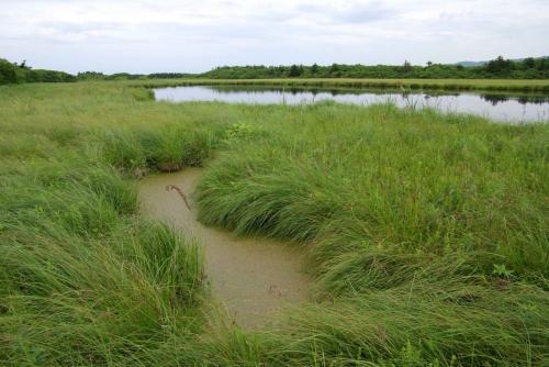 Квакшиное болото