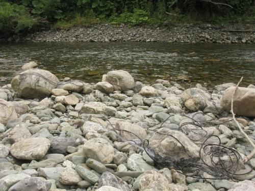 Следы браконьерства в среднем течении реки